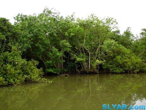 游览东寨港红树林保护区