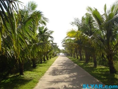 游览文昌东郊椰林