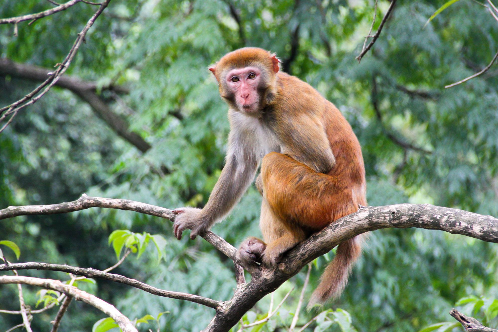 游桂林七星公园,看猴子